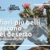 I fiori più belli nascono nel deserto - La cartolina del Care Leavers Day 2021